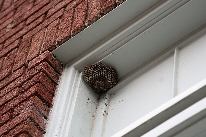 We provide a wasp nest removal service for domestic and commercial properties in Gospel Oak.